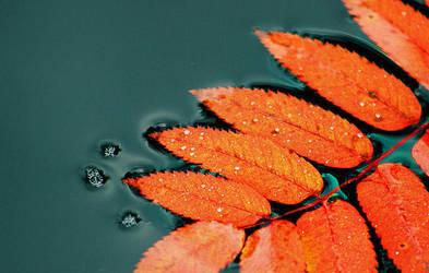 Autumn by KariLiimatainen