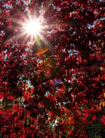 Autumn light by KariLiimatainen