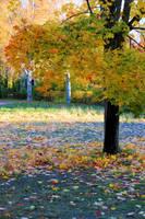 Autumn time.. by KariLiimatainen