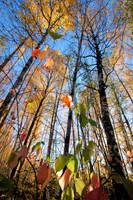 Color splendor in forest by KariLiimatainen