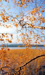 autumn colours . .... by KariLiimatainen
