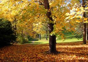 Autumn feeling by KariLiimatainen