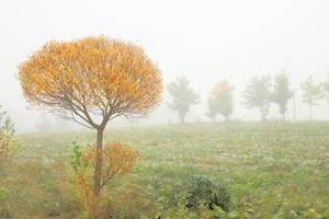 Autumn tree by KariLiimatainen