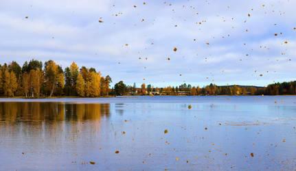 Fall Trees Falling Leaves by KariLiimatainen