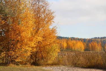 Yellow time. by KariLiimatainen