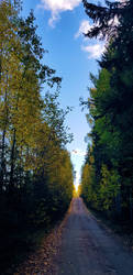 Autumn forest road. by KariLiimatainen