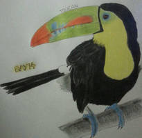 Toucan by drtupps