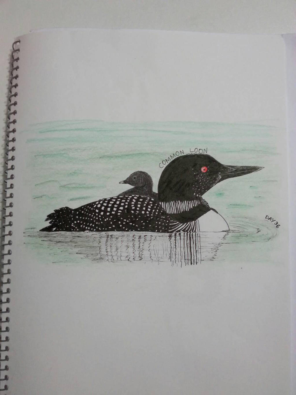 Common Loon by drtupps