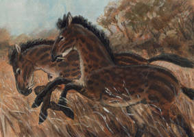 The Wild Breed by Camelid