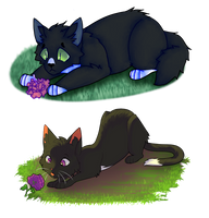 ravenpaw redraw 2015/2018 by Moon-Pool