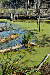 Michigan Marshlands by GrotesqueDarling13