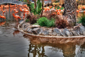 Flamingoes HDR by ProvoAggie
