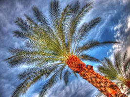 Palm Tree HDR by ProvoAggie
