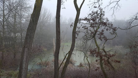 Der verwunschene Wald by dguender