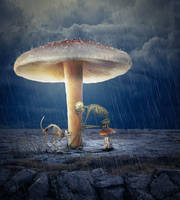 Shelter from the Storm by JackieCrossley