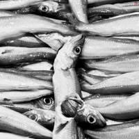I See Dead Fish by daYavuz