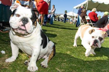 bulldogs by Trueblood