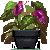 Purple Anthurium by Sindonic