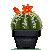 Small Yellow Barrel Cactus by Sindonic