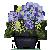 Blue Hydrenga by Sindonic