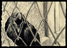 Raven by Kariatyda