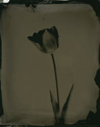 ambrotype 006 by charlesguerin