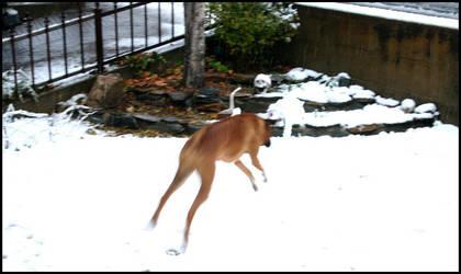 Snow Pounce by TwilightKiss