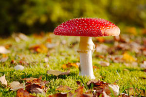 autumn dream by raido-ehwaz