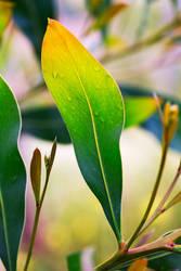rainbow leaf by raido-ehwaz