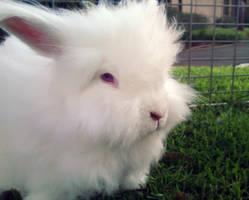 Fluffy Bunny by pixi3angeldreamx