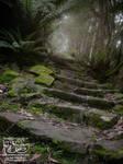 Forest Path - Tasmania by myceliae