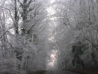 more frosty trees by Elzo-is-the-name