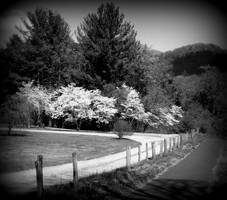 Dogwood landscape by path2000