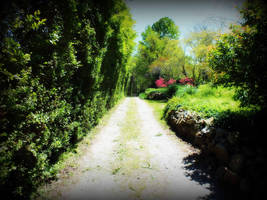 Hedge Road by path2000
