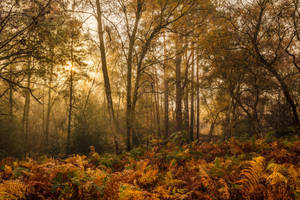 Autumn Wood by snomanda