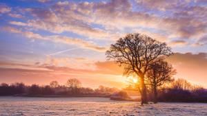 Winterise by snomanda