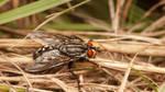The Fly by snomanda