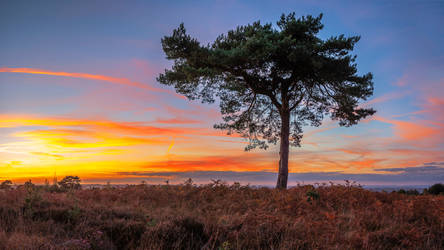 Lonesome Pine by snomanda