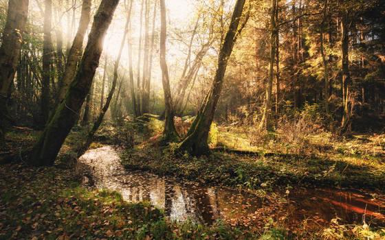 Creek by snomanda
