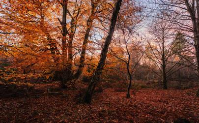 Twilight at the Beech by snomanda
