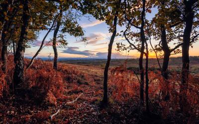 Forest Twilight by snomanda