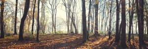 Pano Wood by snomanda