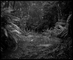 Jungle in Black and White #2 by Roger-Wilco-66