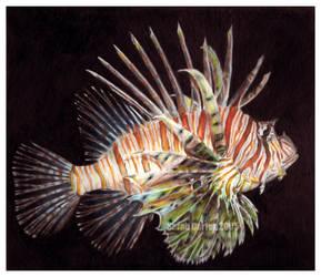 Lionfish by sarahcarter