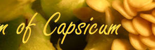 I Dream of Capsicum by causticgit