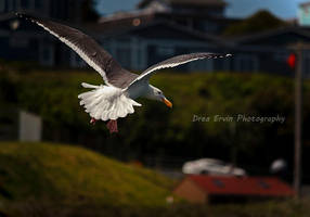 Song to a Seagull by DreaErvin