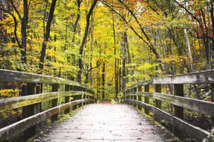 Autumn Trail by KrisVlad