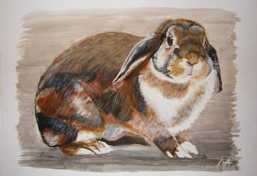 Rabbit: Cascada by M-J-M-A