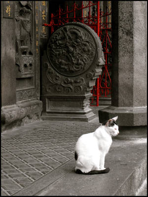 Chat du Temple by Ithilia