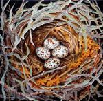 Mockingbird Nest by TempestErika